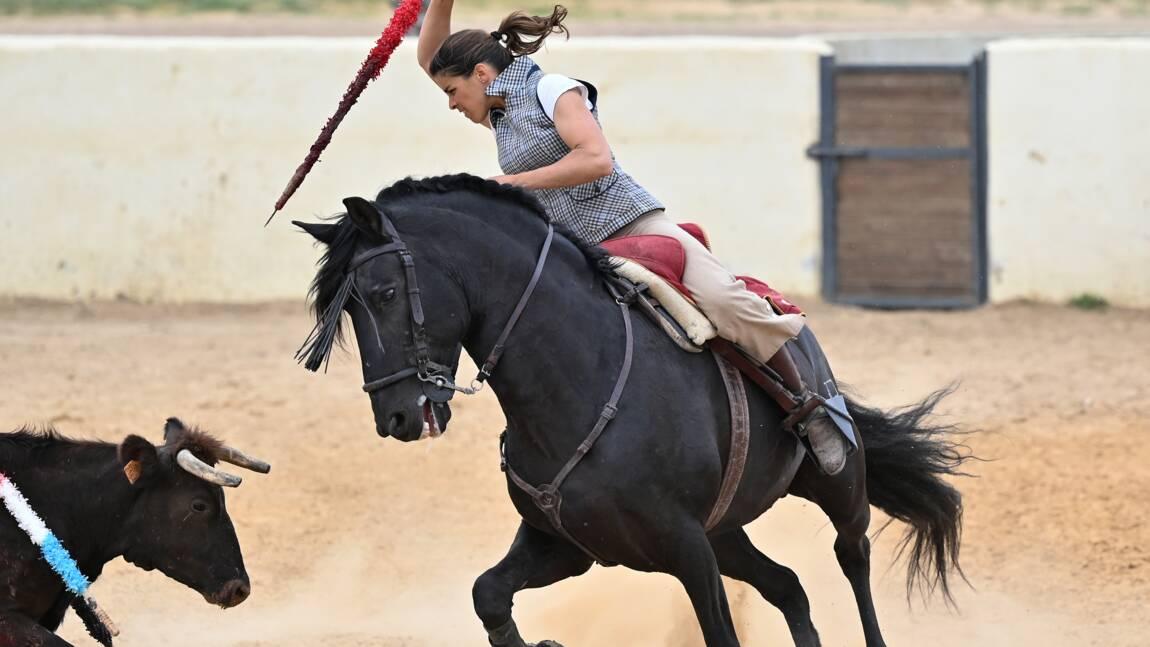 Corridas et cruauté envers les animaux: la SPA à nouveau déboutée à Nîmes