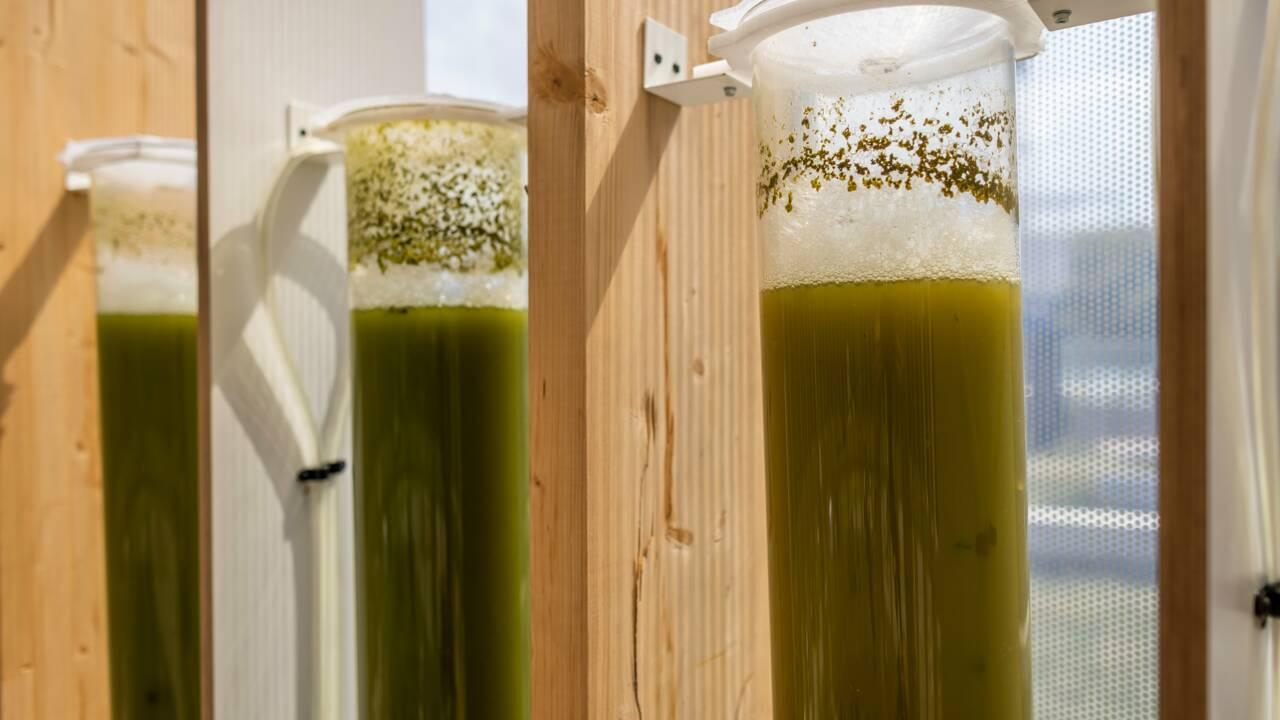 Pollution : à Varsovie, un kiosque à micro-algues offre de l'air pur aux enfants