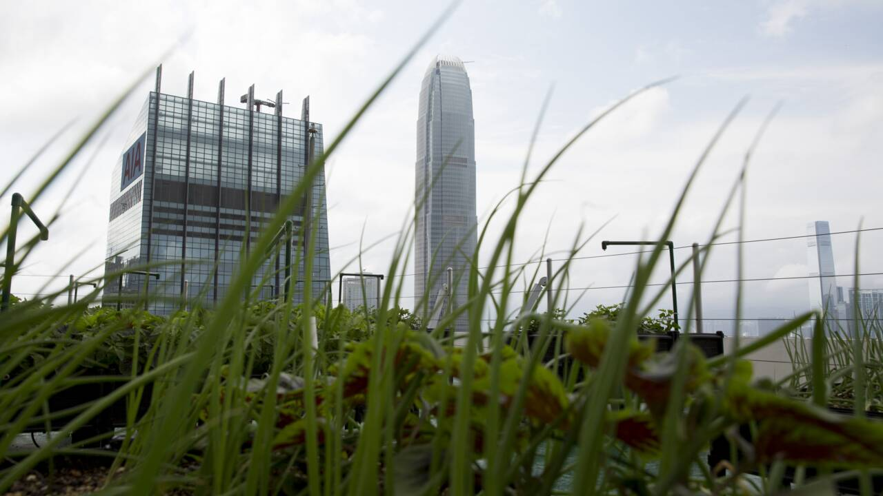 Hong Kong : l'agriculture urbaine dans les nuages pour se reconnecter avec la nourriture