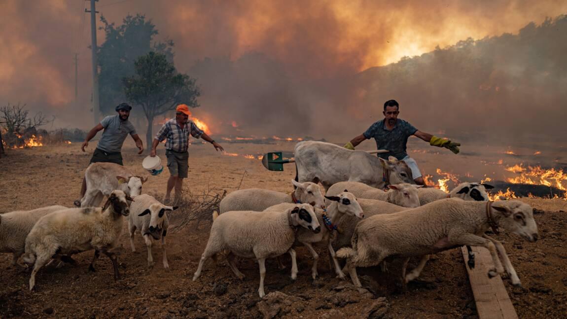 Incendies en Turquie : les paysans voient leurs animaux périr dans les flammes