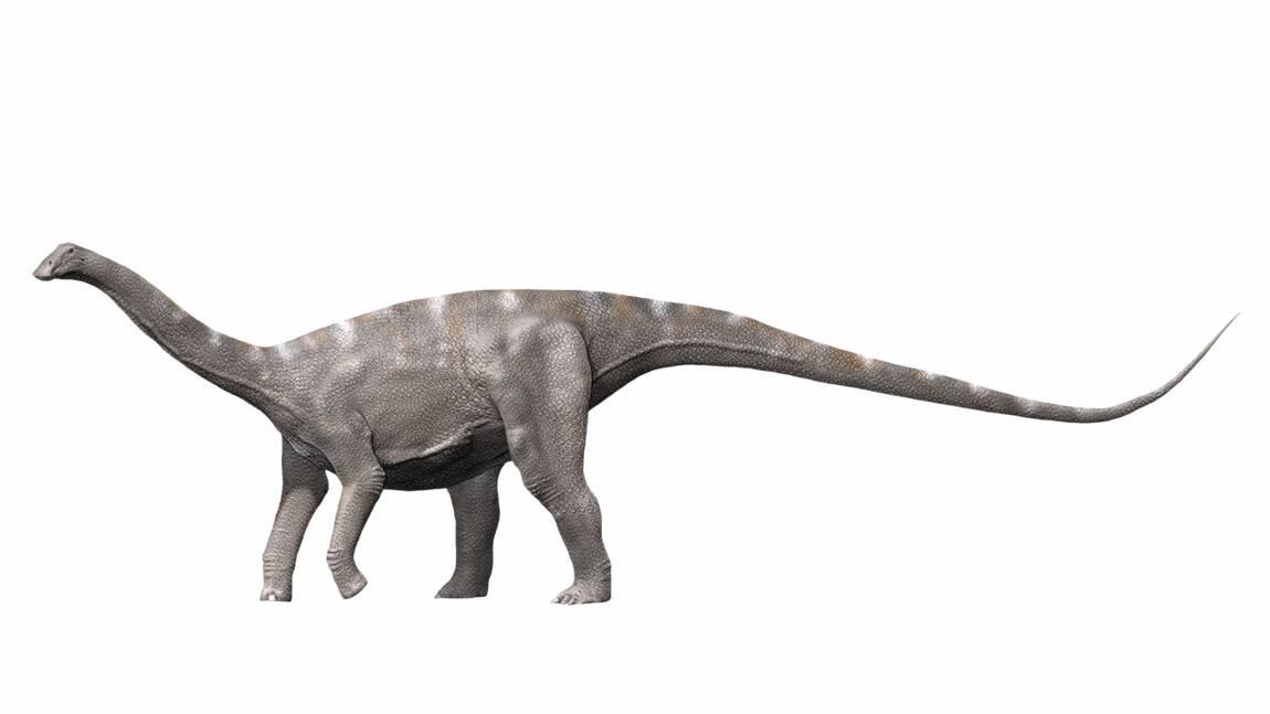 Nigersaurus taqueti : qui était le dinosaure aux 500 dents ?