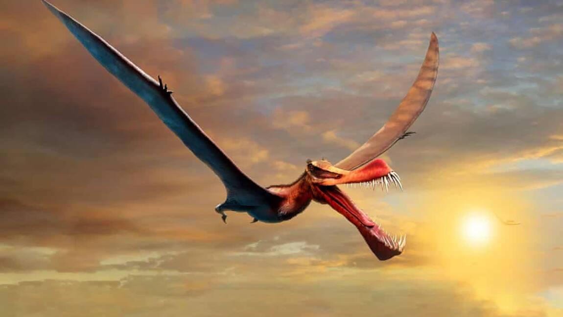 Ce ptérosaure aux allures de dragon est le plus grand jamais découvert en Australie