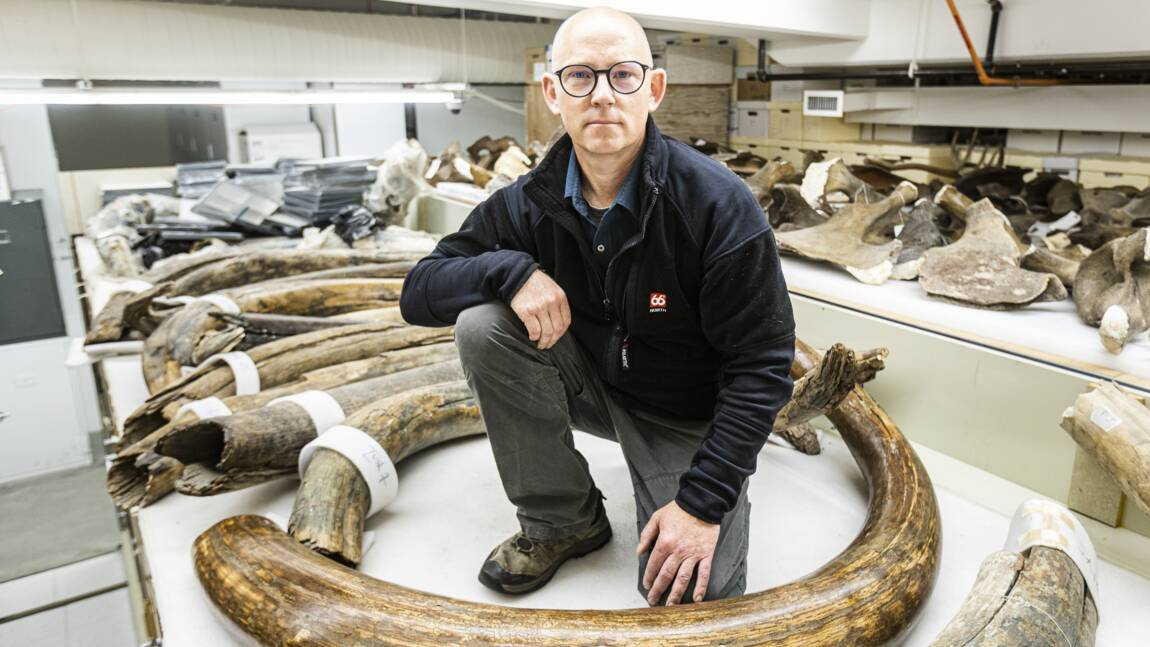 Dans les pas d'un mammouth laineux, il y a 17.000 ans