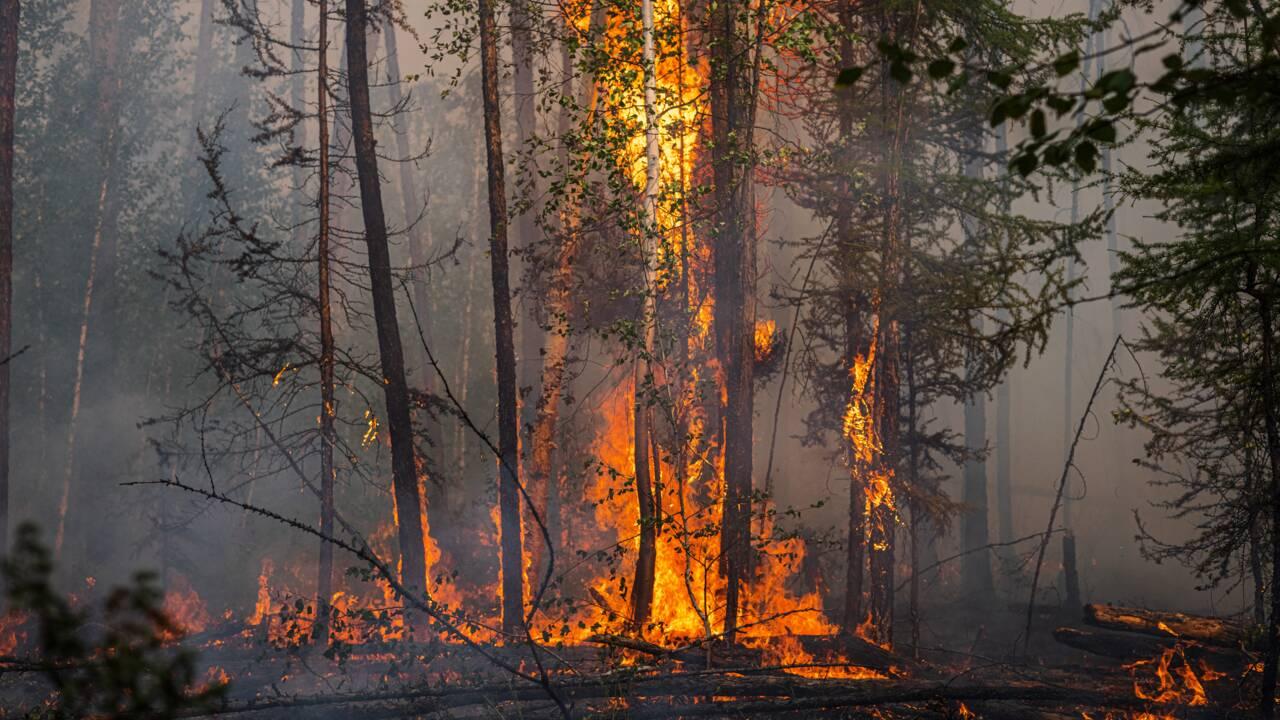 En Sibérie, les incendies s'aggravent et leur fumée a atteint le pôle Nord