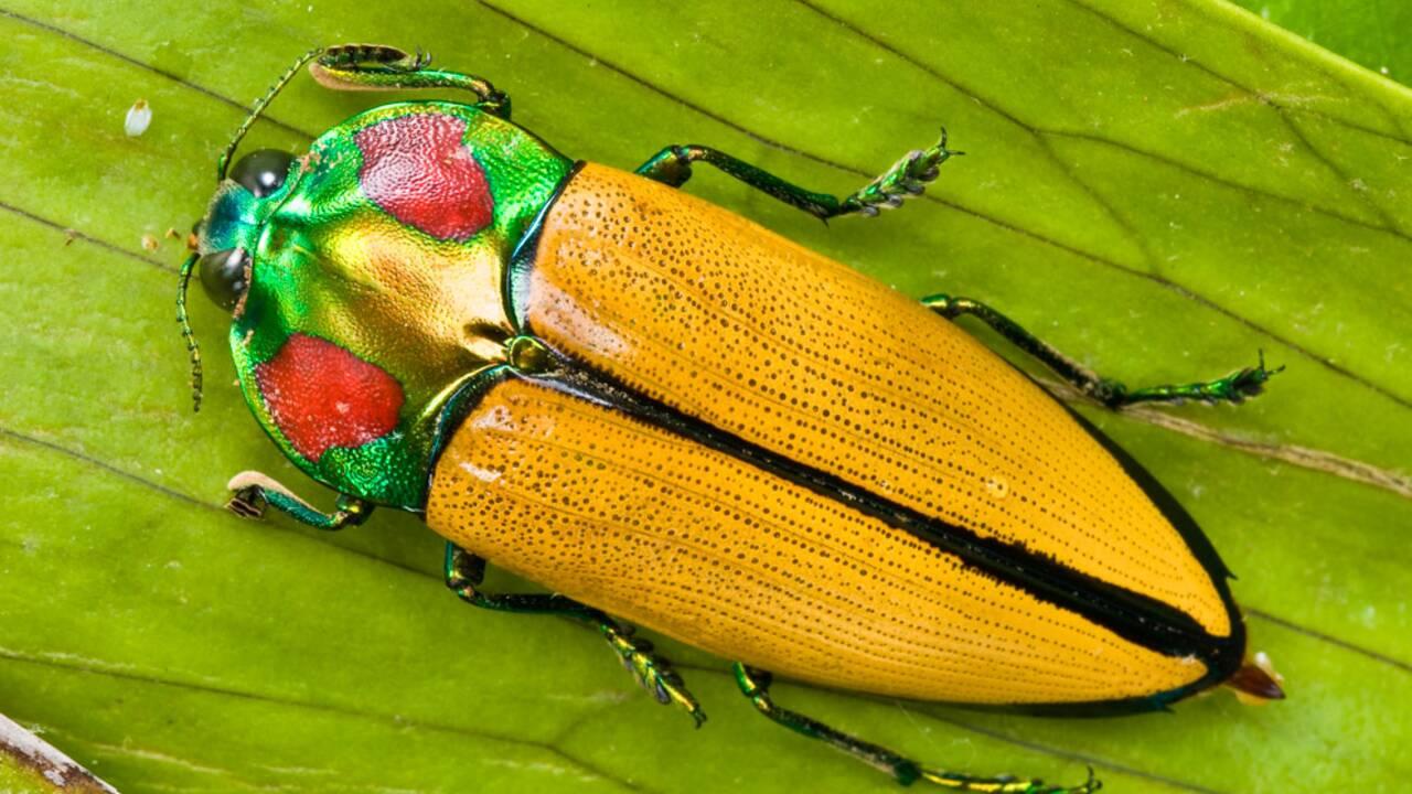5 espèces endémiques de Papouasie-Nouvelle-Guinée, arche de Noé du Pacifique
