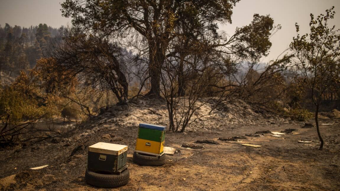 """""""Du paradis à l'enfer"""", les apiculteurs d'Eubée ont tout perdu dans le feu"""