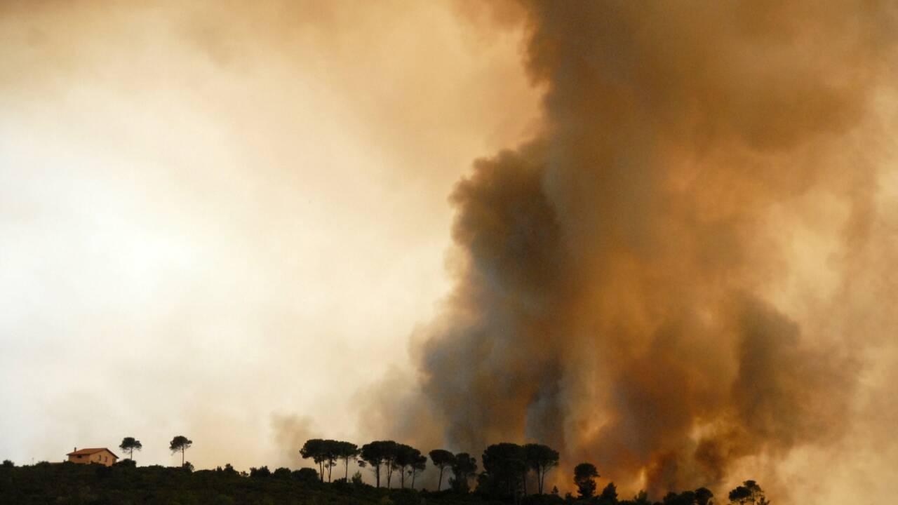 Les espèces animales les plus menacées par les incendies