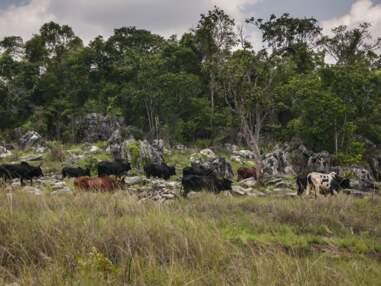 A Madagascar, sur les sentiers de la guerre du zébu