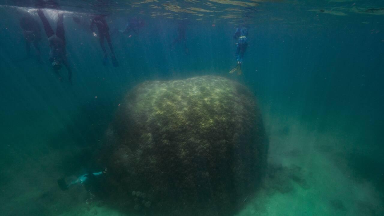 Ce corail géant est l'un des plus grands et plus vieux observés dans la Grande Barrière