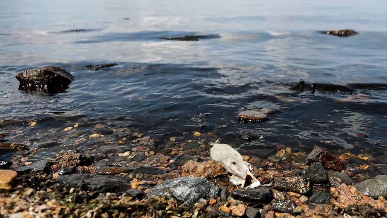 Espagne: chaîne humaine après la mort de millions de poissons asxphyxiés par les nitrates