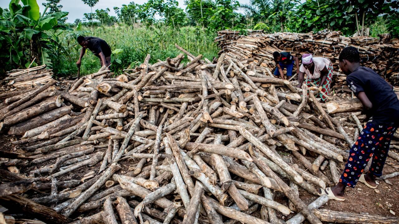 Dans le sud du Bénin, l'une des dernières forêts marécageuses en danger