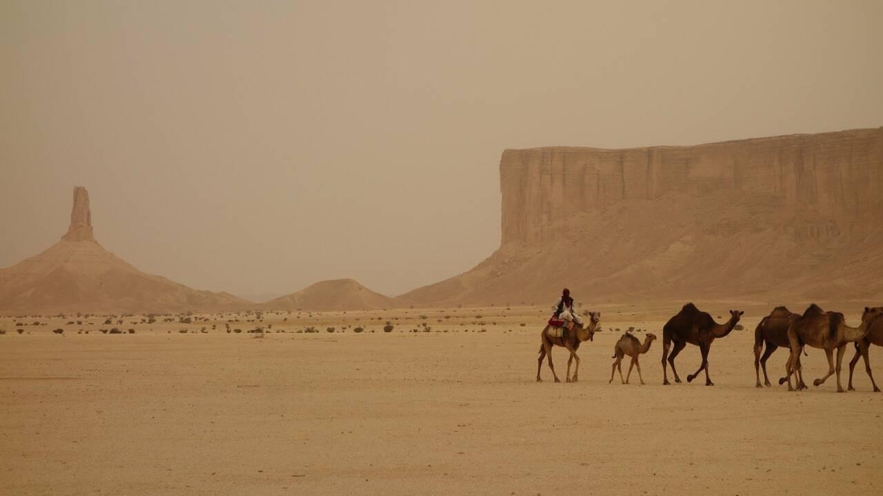 """L'""""Arabie verte"""" était une voie de migration des premiers humains"""