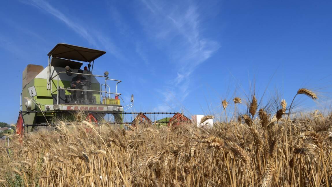 En Tunisie, le renouveau des semences traditionnelles face au défi climatique