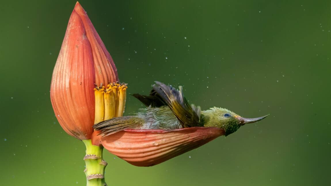 Les superbes photos d'oiseaux lauréates du Bird Photographer of the Year 2021