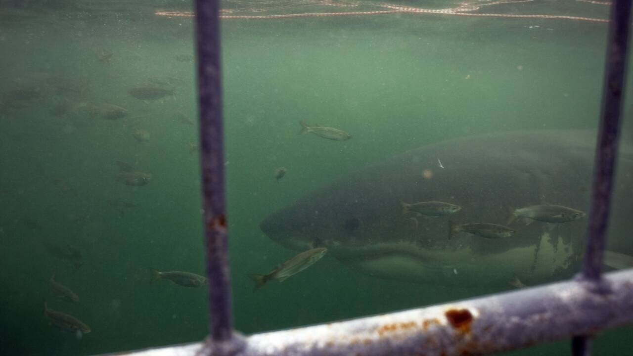 """""""Liste rouge"""" de l'UICN : le dragon de Komodo et de nombreux requins menacés"""