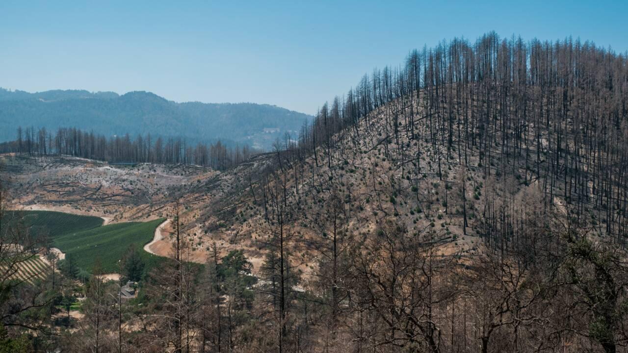 Protéger les vignobles californiens des feux, coûte que coûte