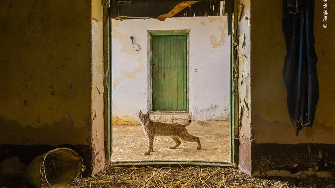Wildlife Photographer of the Year 2021 : et les photos félicitées cette année sont...