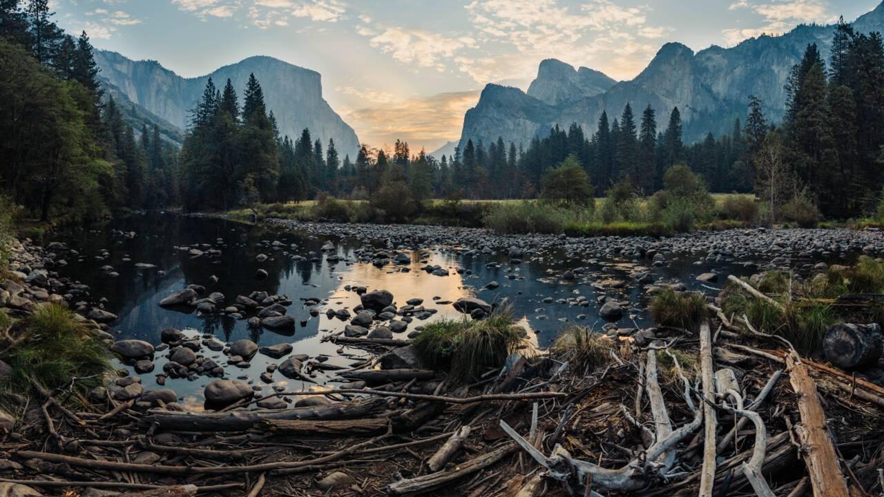 Le changement climatique pourrait perturber les cycles du carbone forestier