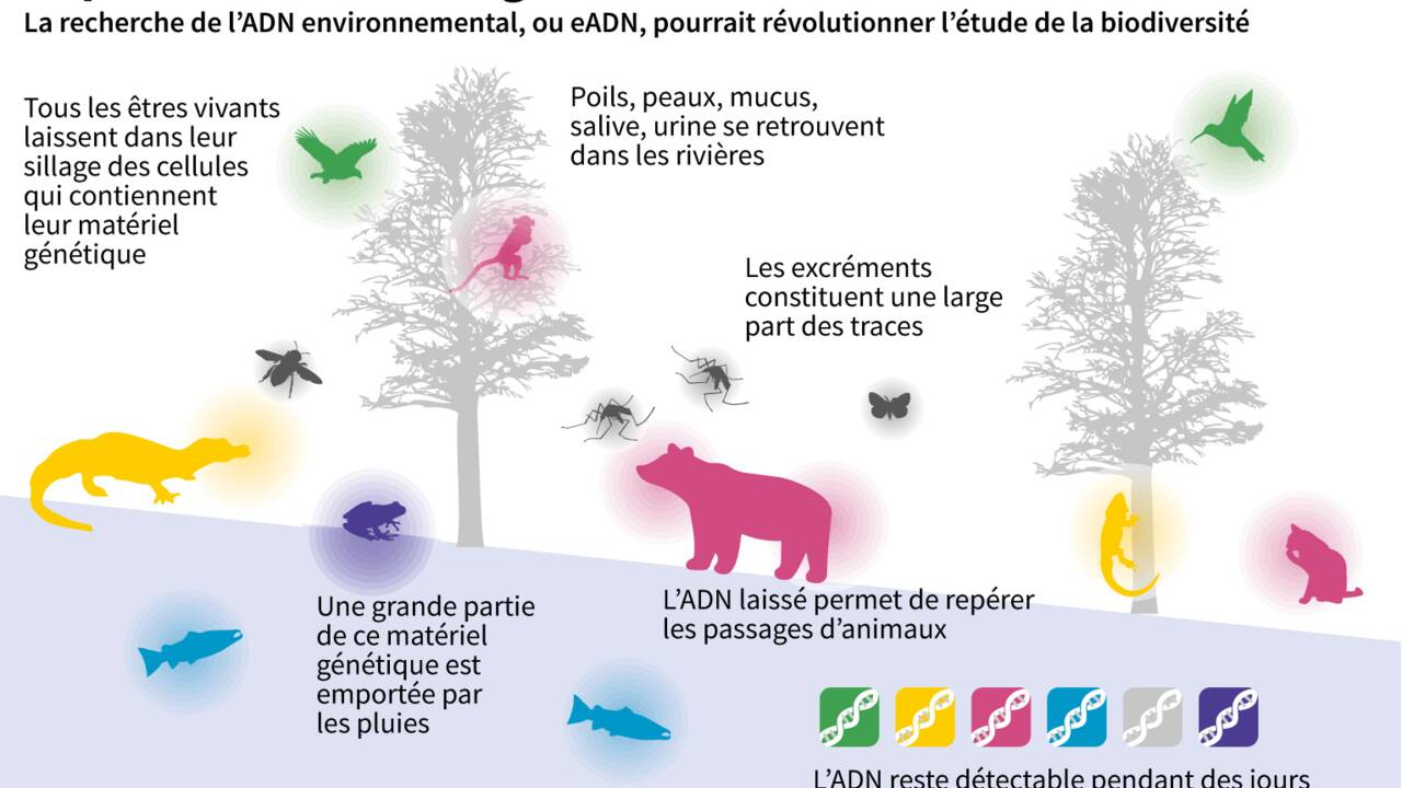 L'ADN environnemental : une technique révolutionnaire pour traquer les espèces en danger