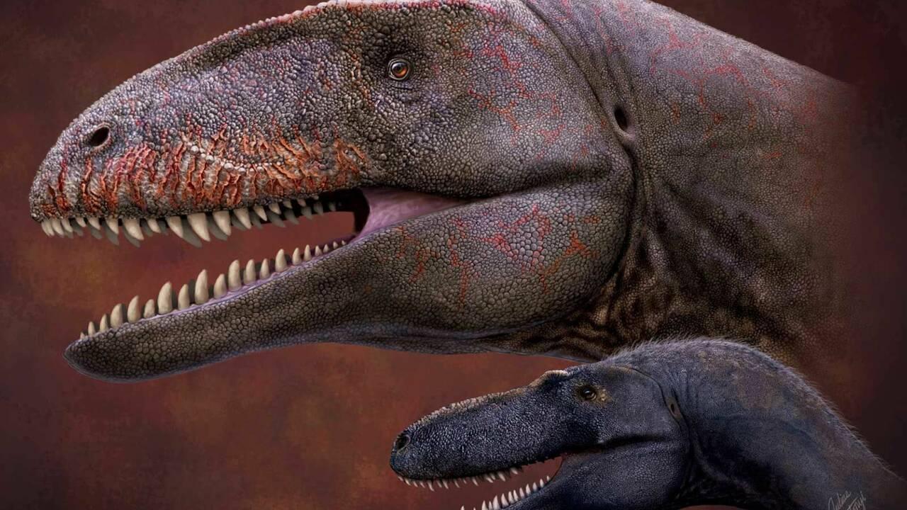 Ce dinosaure découvert en Ouzbékistan était le roi des prédateurs il y a 90 millions d'années
