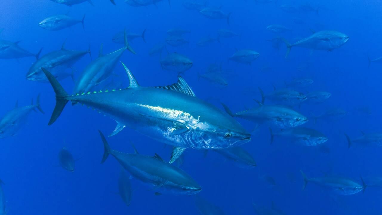 Les six bonnes nouvelles pour la biodiversité de la Liste rouge de l'UICN