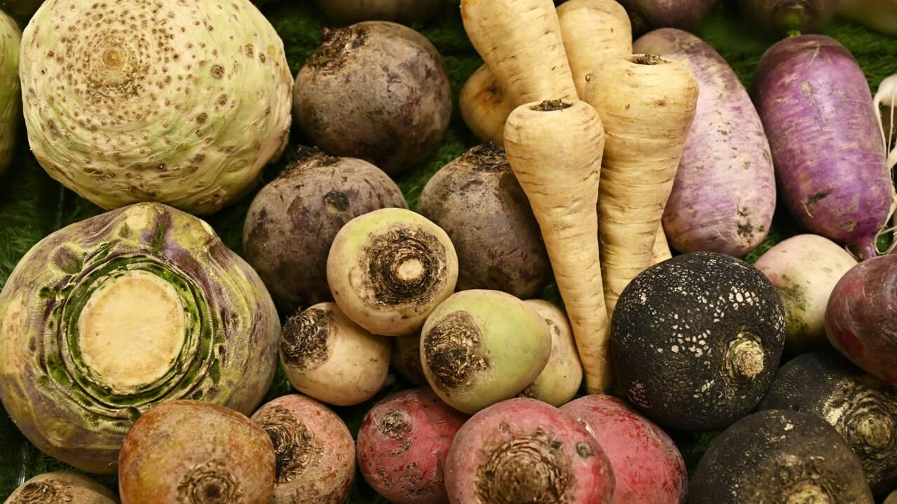 Les semences paysannes, un enjeu clé pour l'agriculture biologique