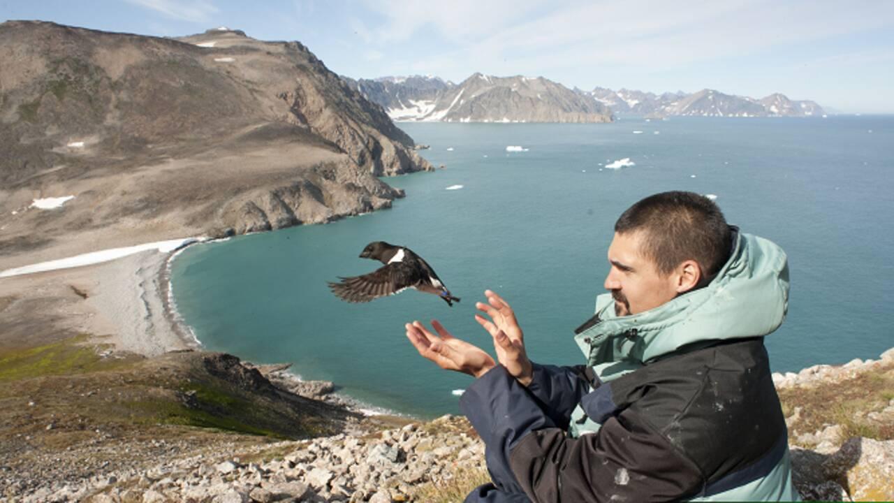 Pris dans les cyclones, les oiseaux marins de l'Atlantique Nord meurent affamés