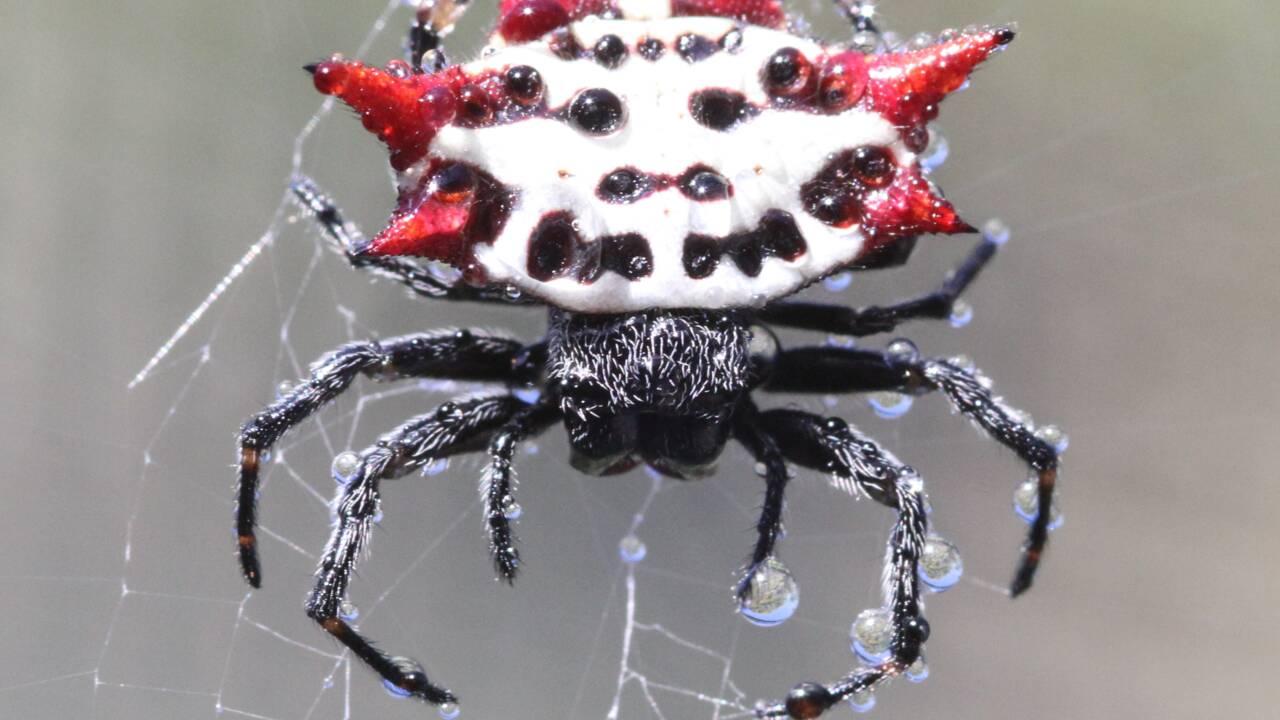 Les images hypnotisantes d'une araignée filmée en train de tisser sa toile