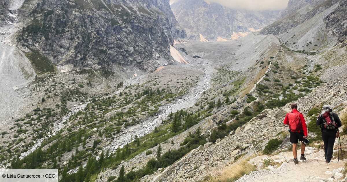 Changement climatique dans les Alpes : animaux, plantes et champignons tentent de faire face, mais pas tous au même rythme