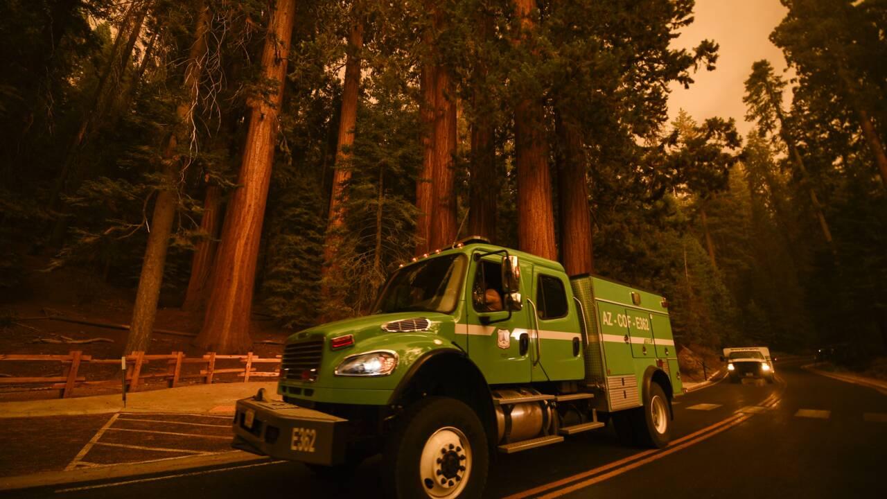 Les pompiers californiens ont bon espoir de sauver les séquoias géants des incendies