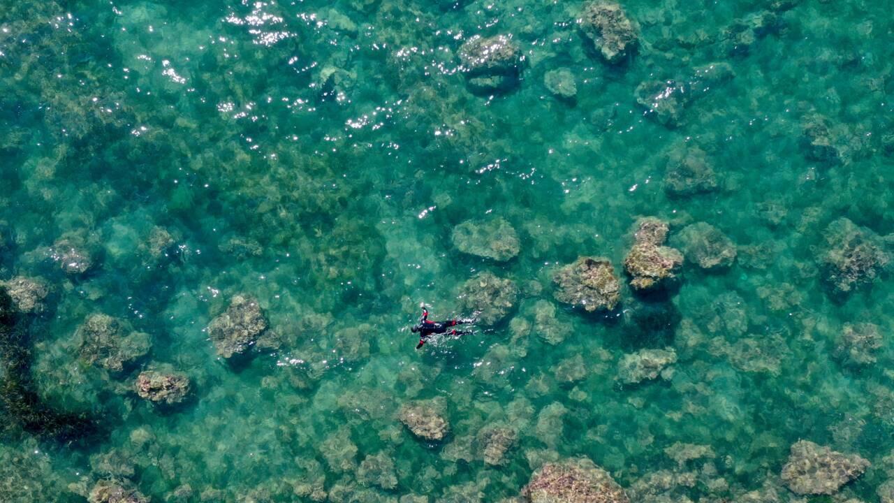Menaces sur les forêts marines: en Albanie, c'est le désert des gobies