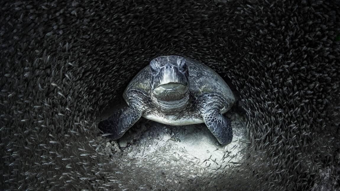 Les splendides photos sous-marines récompensées par les Ocean Photography Awards 2021