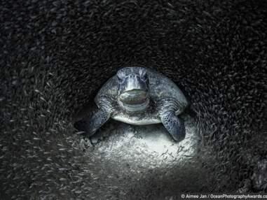 Ocean Photography Awards 2021 : les splendides photos sous-marines récompensées