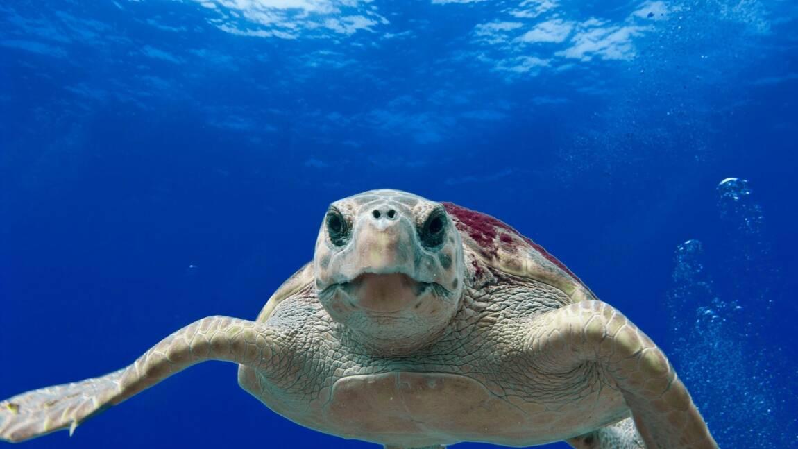 Pour la première fois, des oeufs de tortues ont éclos près de Venise