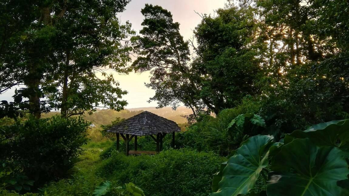 """""""DestinationForêt"""" : votez pour les finalistes du concours de photographie forestière de l'ONF"""