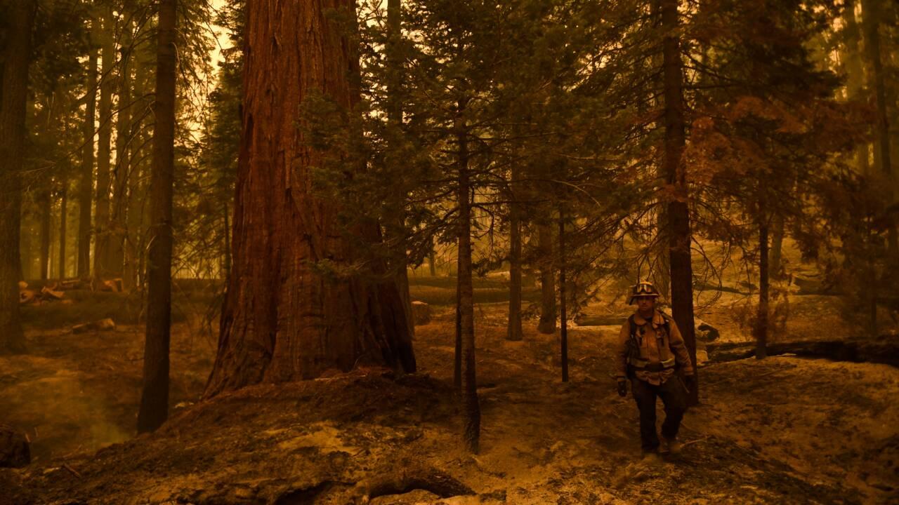 Californie: combattre le feu par le feu pour sauver les forêts