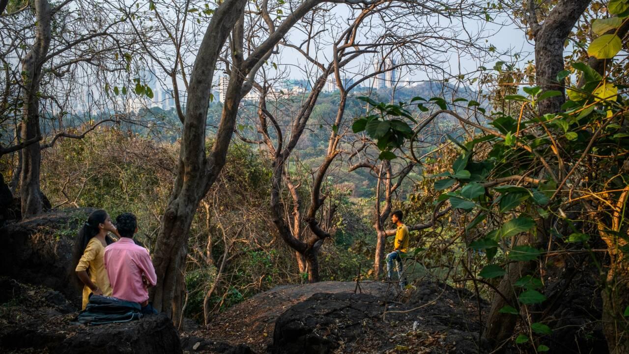 En Inde, une incroyable jungle au cœur de Mumbai menacée par de grands chantiers