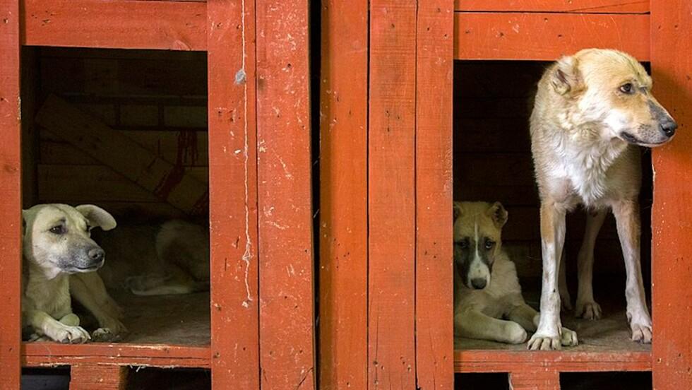 Corée du Sud : le président propose d'interdire de manger la viande de chien