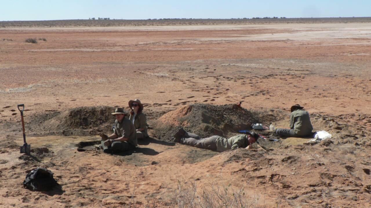 Australie : découverte d'un squelette d'Archaehierax, l'aigle qui terrorisait les koalas il y a 25 millions d'années