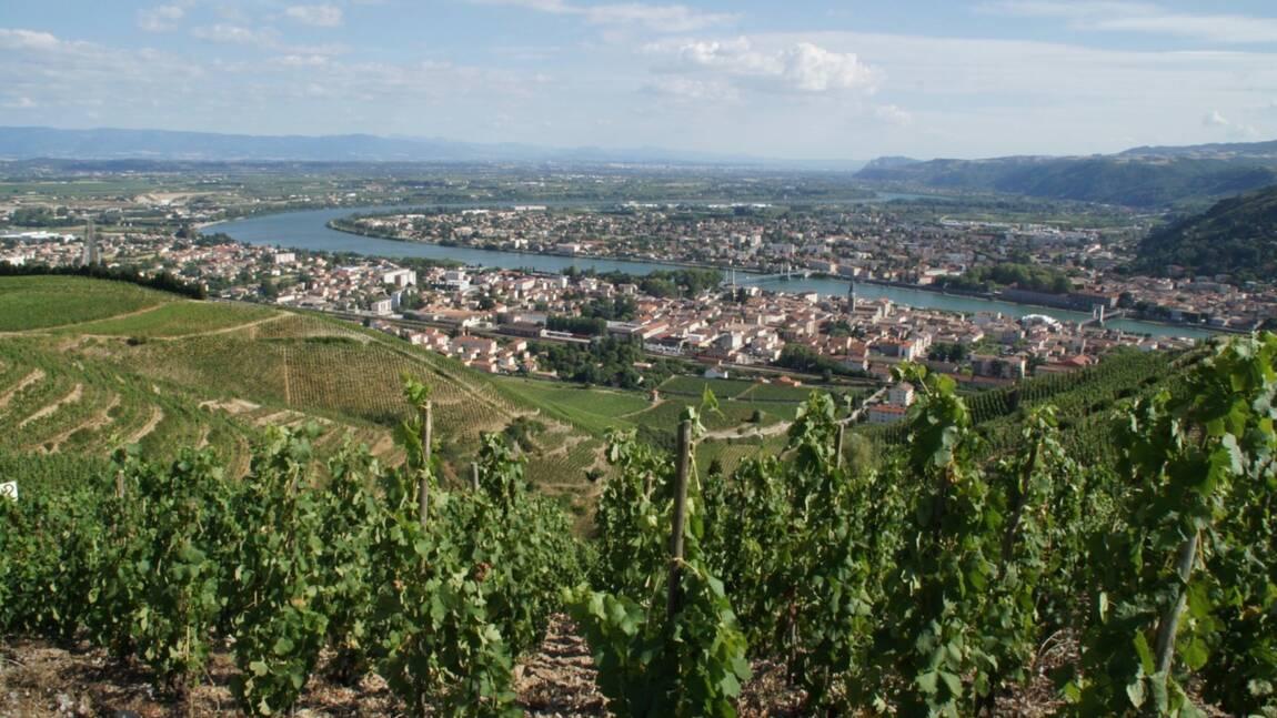 Des vignerons passionnés redonnent vie à des vins antiques dans la vallée du Rhône