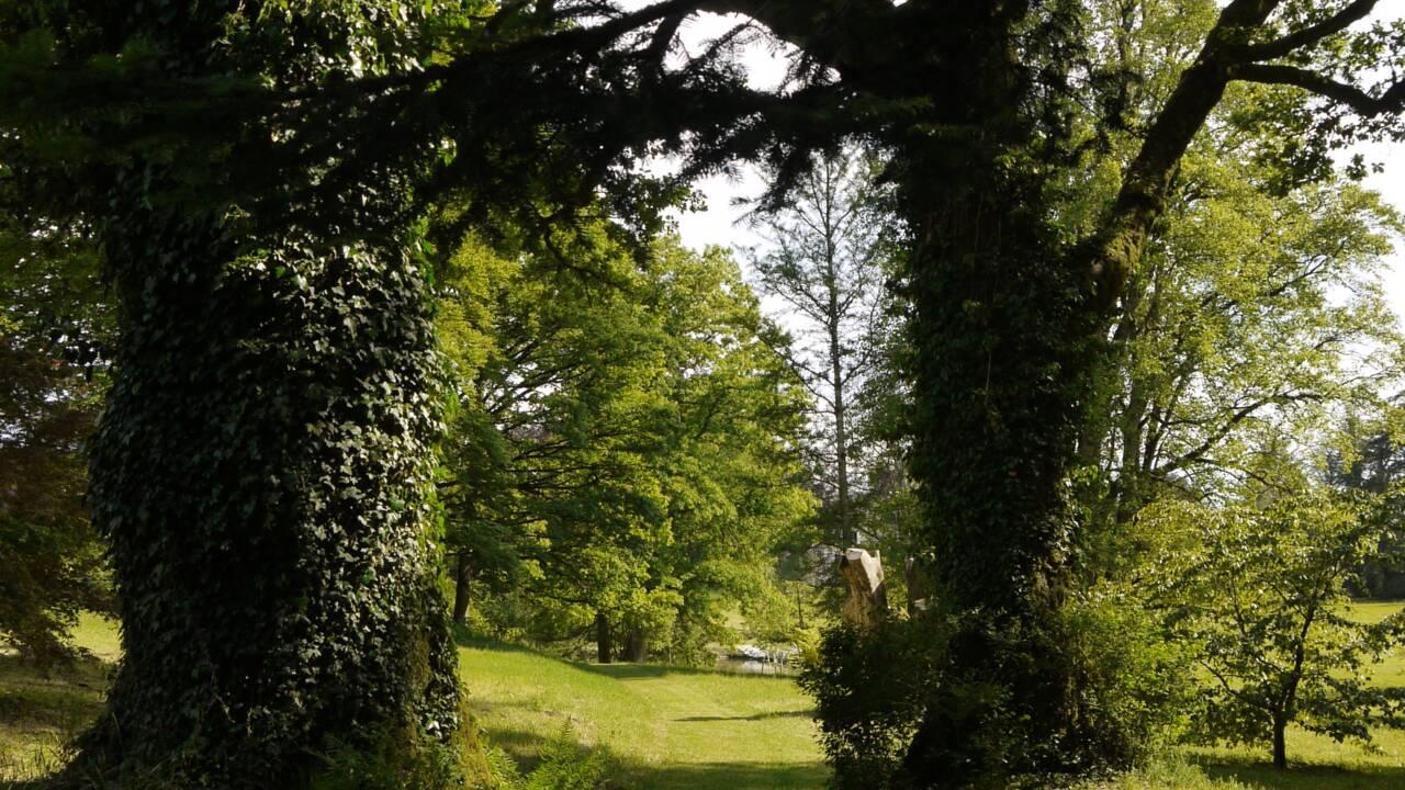 Pour faire face au changement climatique, les vieux arbres sont capables d'absorber davantage de CO2