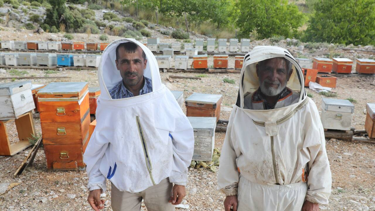Victime des flammes, le précieux miel de pin turc en sursis