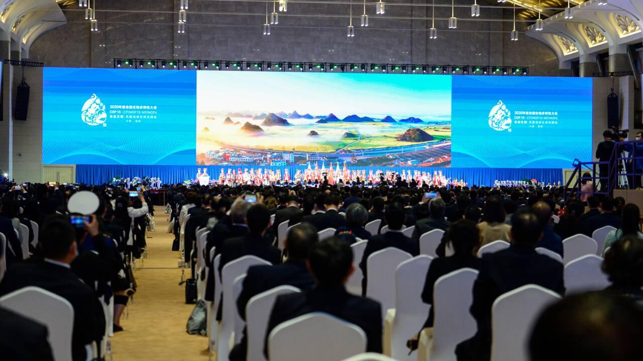 Plusieurs fois reportée, la COP15 biodiversité s'ouvre depuis la Chine