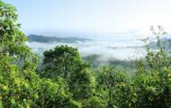 Facebook to take action against illegal sale of Amazon rainforest protected areas on its site