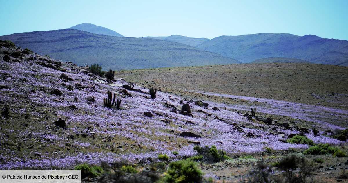 Le Chili veut arroser le désert d'Atacama, un désastre annoncé pour l'écosystème