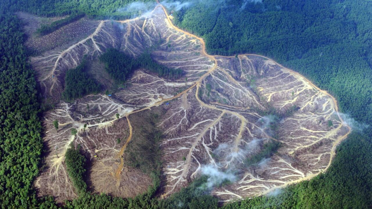 Déforestation: l'échec d'un accord majeur en Indonésie souligne l'ampleur du défi