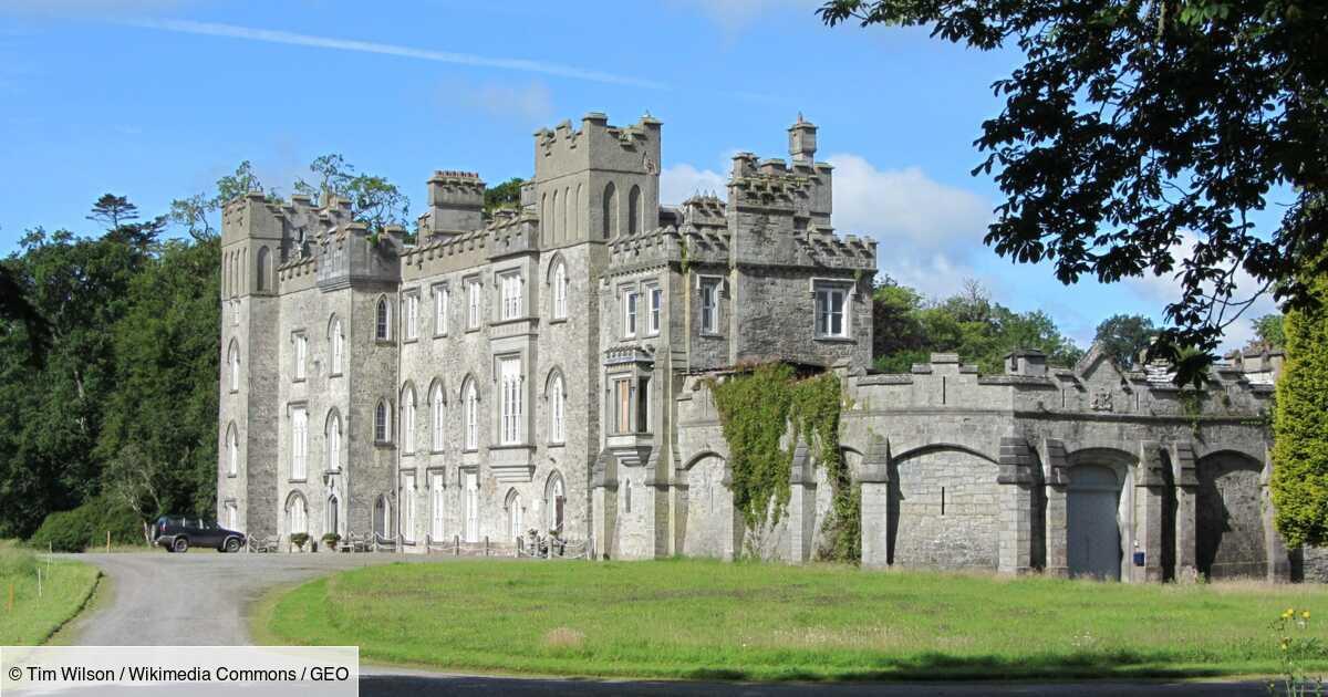 """En Irlande, un baron écologiste """"réensauvage"""" son domaine familial"""