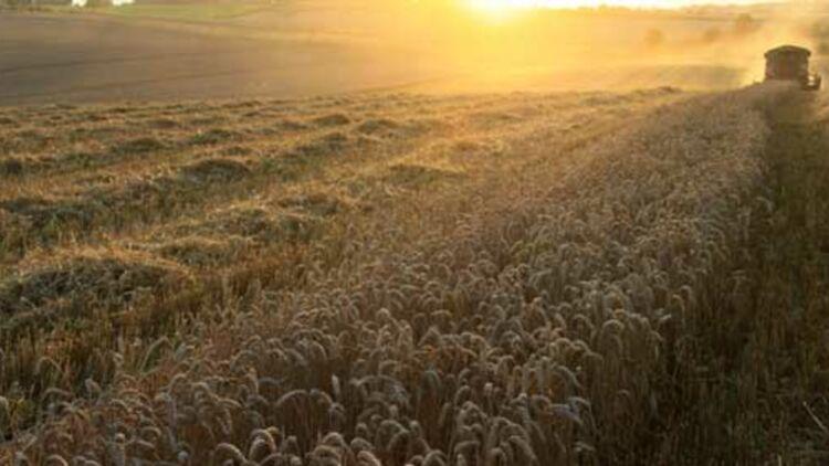 Un agriculteur moissonne son champ de blé, à Hirson, en Picardie. © REUTERS.