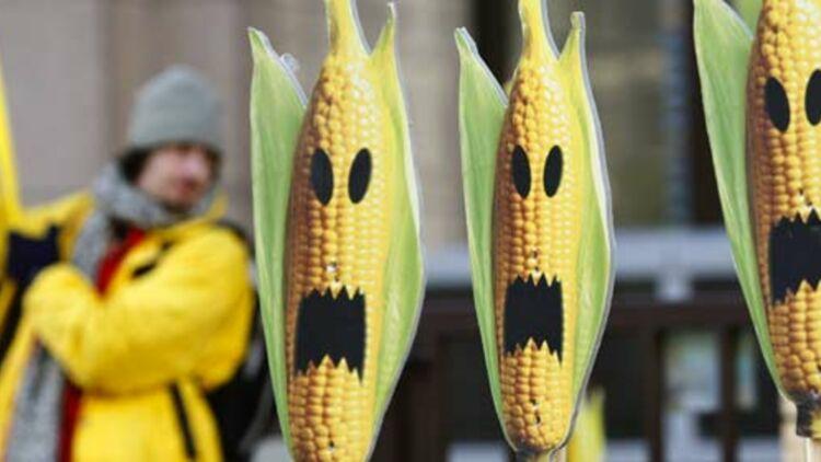 Des militants de Greenpeace protestent contre le maïs génétiquement modifié, lors d'une manifestation à Bruxelles en 2008. © REUTERS.
