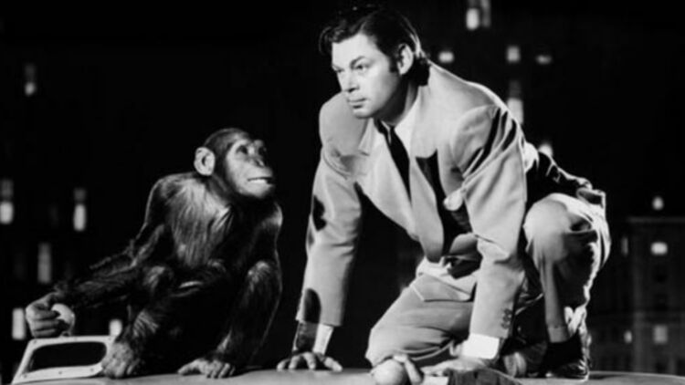 Johnny Weissmuller et Cheeta dans Les aventures de Tarzan à New York (1942). © Allociné / MGM.